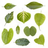 Assorted green leaves isolated Stock Photos
