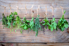 Assorted hanging herbs ,parsley ,oregano,mint,sage,rosemary,swee Stock Photos