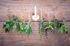 Assorted hanging herbs ,parsley ,oregano,mint,sage,rosemary,swee Royalty Free Stock Images