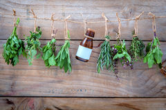Assorted hanging herbs ,parsley ,oregano,mint,sage,rosemary,swee. T basil,holy basil,  and thyme for seasoning concept on rustic old wooden background Stock Photo