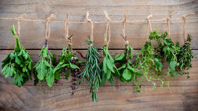 Assorted hanging herbs ,parsley ,oregano,mint,sage,rosemary,swee. T basil,holy basil,  and thyme for seasoning concept on rustic old wooden background Stock Photos