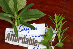 Assorted herbs Stock Images
