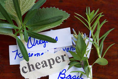 Assorted herbs Royalty Free Stock Photos