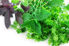 Free Assorted Herbs Stock Image - 3138331