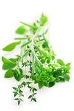 Assorted herbs Royalty Free Stock Images