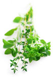 Assorted herbs Royalty Free Stock Image