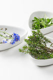 Assorted herbs with focus to fresh rosemary Royalty Free Stock Image