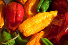 Assorted Hot Peppers Royalty Free Stock Images