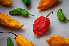 Assorted Hot Peppers Stock Photography