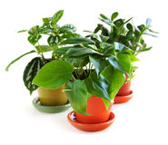 Assorted houseplants Stock Photos