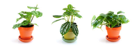 Assorted houseplants Stock Images