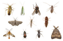 Assorted Insects Isolated on White. Photograph of an interesting and beautiful assortment of living insects common to the midwest United States isolated against Royalty Free Stock Photography