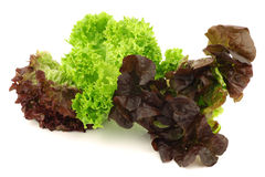 Assorted lettuce Royalty Free Stock Photo