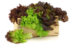 Assorted lettuce in a wooden box Royalty Free Stock Image