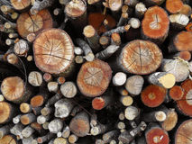 Assorted logs background Royalty Free Stock Images