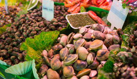 Assorted mollusks Stock Photo