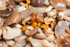 Assorted mushrooms. Assortment of various mushrooms, diced and pickled Stock Images