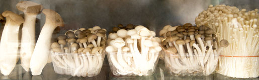 Assorted mushrooms Stock Images