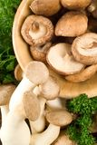 Assorted mushrooms Stock Image