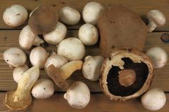 Assorted mushrooms royalty free stock photo