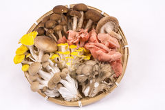 Assorted mushrooms Stock Photography