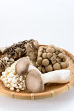 Assorted of mushrooms Stock Photos
