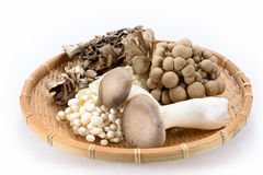 Assorted of mushrooms Royalty Free Stock Photo