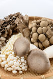Assorted of mushrooms Royalty Free Stock Photos