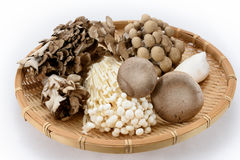 Assorted of mushrooms Royalty Free Stock Images
