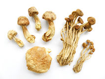 Assorted mushrooms, dried. An image showing an assortment of dried edible exotic oriental mushrooms - with some dried oriental willow mushrooms, or brown tea royalty free stock photos