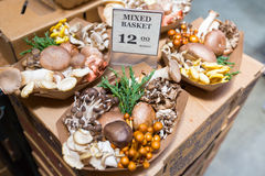 Assorted mushrooms at a farmers market in San Francisco, CA Royalty Free Stock Photography