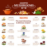 Assorted  Mushrooms Infographics Stock Photo