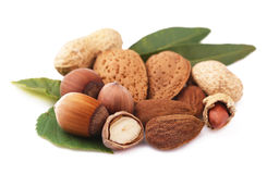 Assorted nuts isolated Stock Photo
