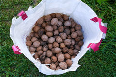 Assorted nuts in an white bag plastic. Green grass and nuts Stock Images