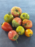 Assorted old-fashioned organic tomatoes Royalty Free Stock Photo