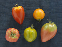 Assorted old-fashioned organic tomatoes Royalty Free Stock Images