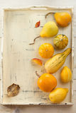 Assorted ornamental gourds Royalty Free Stock Photos