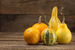 Assorted ornamental gourds Royalty Free Stock Photo