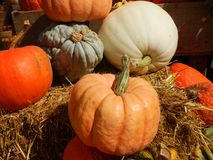 Assorted Ornamental Pumpkin Squash. Variety of decorative pumpkin squash on a bale of hay stock photography