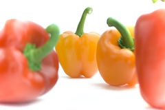 Assorted Peppers against White Background Stock Images