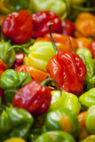 Assorted Peppers On Display At Market Royalty Free Stock Photography