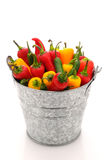 Assorted peppers in pail Royalty Free Stock Image