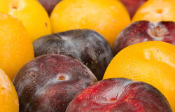 Assorted plums Royalty Free Stock Photos