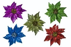 Assorted Poinsettias Royalty Free Stock Photo