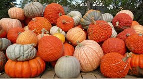 Assorted pumkin varieties piled high Royalty Free Stock Image