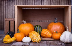 Assorted Pumpkins And Gourds Stock Photo