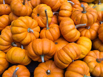 Assorted pumpkins collection on the farmers Market Stock Photo