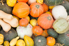 Assorted pumpkins Royalty Free Stock Photography