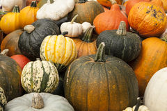 Assorted Pumpkins Royalty Free Stock Photo