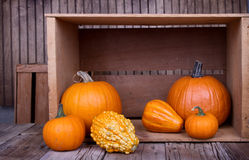 Assorted pumpkins and gourds Stock Images